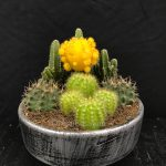 Mixed Cactus Yellow